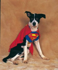 superman kostüm hund